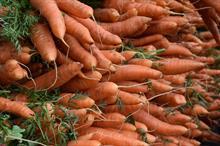 Alert: cavity spot on carrot