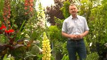 ITV Tonight Show examines green credentials of garden industry