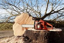 Forestry Commission relax tree felling rules to help manage pests and diseases outbreaks