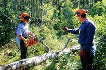 What is the best way to make arboriculture more diverse?