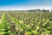 Top UK Fruit Producers 2020 - 26 - 30