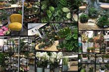 Houseplants: what is driving the latest trend among buyers?