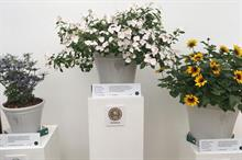 RHS Chelsea Flower Show new plants: how do they find their showcase?