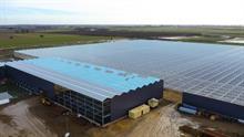 How will Bridge Farm's new glasshouse change the market?