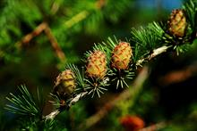 APHA introduces measures against bark beetles and warns about a host of pests and diseases