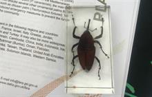 APHA warns on seasonal pests