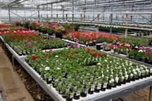 Bedding plants update shows tougher 2021
