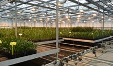 Date palm grower opens £2.5m UK facility