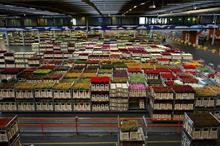 Dutch plant and flower exports up 3%