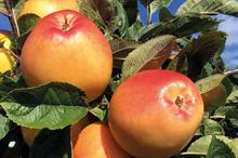 Horticulture Week Business Award - Best New Edible Crop Variety