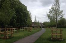 Hillier supplies disease-free elms to council
