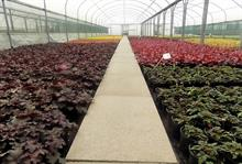 Garden Centre Plants sees highest reserves for decades as first imports arrive