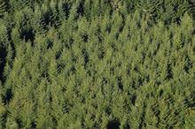 Forestry Commission to spend £6.2m on trees in latest tender