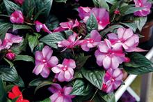 Defra figures show rise in UK ornamental horticulture value and exports