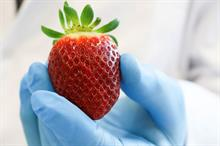 "High-vitamin strawberry ""could appeal to health-conscious shoppers"""