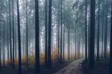 Forestry investment market reaches record levels in spite of pandemic