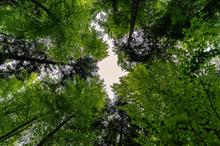 Surrey ranked number one for tree cover in England