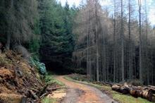 Timber price spike presents opportunity for more tree planting, says Confor
