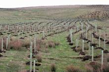Are 'climate emergency' declarations helpful for tree managers?