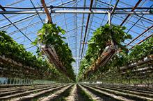 What is the most cost-effective way to heat a soft-fruit glasshouse?