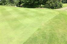 Golf course trial of Carbon Gold soil improver shows positive results
