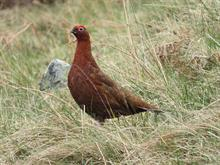Report suggests horticulture replaces grouse moors