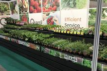 Suppliers report success with UK-grown aromatic herbs