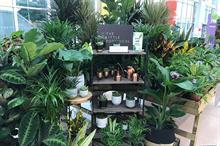 Hills Plants wins best nursery stand at Glee