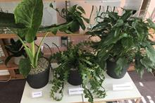 What are the big houseplant trends for 2020?