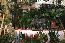 Most popular 45 houseplants and cut flowers sold in 2020 revealed