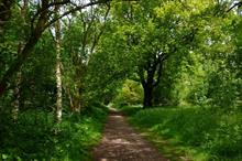 Department of Transport halts felling of ancient woodlands for HS2 project
