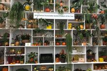Houseplants - what's the latest?
