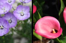 Plant Heritage seeks 10 missing plant genera