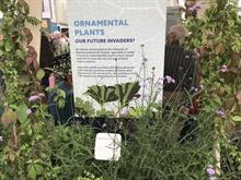 University of Reading RHS Chelsea exhibit identifies windmill palm and Argentinian vervain as potential invaders