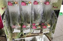 DIY houseplant kits on trend