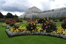 Kew to use its unrestricted reserves to meet 25% reduction in total income for 2020/21