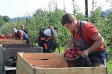 Defra labour survey shows 5.4% seasonal worker shortfall