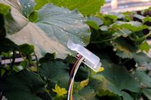 """Plants' need for water """"shown by leaf thickness and capacitance"""""""