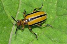 Pests and diseases added to Plant Health Risk Register