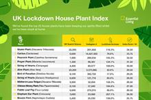 Most popular lockdown houseplants across the UK during the coronavirus crisis