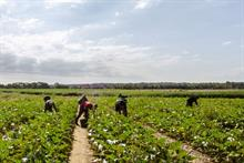 Parliamentary committee relaunches horticulture and agriculture labour inquiry