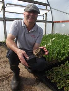 Shrub liner nursery exhibits at Four Oaks after going peat-free