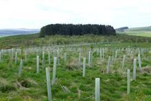 """Mass planting of UK-native broadleaf woodland """"economically impossible"""""""