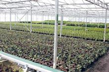 How can ornamentals growers approach risk management?