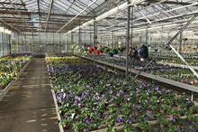 Belgium growers coronavirus emergency fund announced