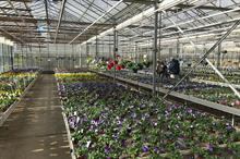 How a bedding shortage has impacted the horticulture industry