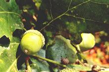 Defra plans to propose tree quarantine systems as part of new 'tree resilience strategy'