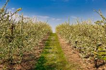 How British Apples & Pears is planning to pick 2020's crop