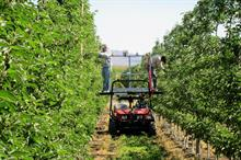 Do expectations of automation need to be revised for production horticulture?