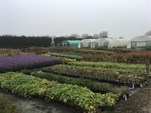 Palmstead Nurseries aims greater own propagation